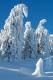 harz-brocken-winter-schnee-sonne-baum-gestalten-C_NIK_3612