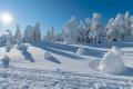 harz-brocken-winter-schnee-sonne-baum-gestalten-C_NIK_3618