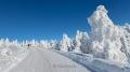harz-brocken-winter-schnee-sonne-baum-gestalten-C_NIK_3640