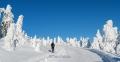 harz-brocken-winter-schnee-sonne-baum-gestalten-C_NIK_3667