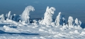 harz-brocken-winter-schnee-sonne-baum-gestalten-C_NIK_3720