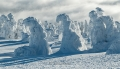 harz-brocken-winter-schnee-sonne-baum-gestalten-C_NIK_3484