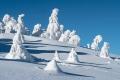 harz-brocken-winter-schnee-sonne-baum-gestalten-C_NIK_3549