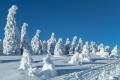 harz-brocken-winter-schnee-sonne-baum-gestalten-C_NIK_3576