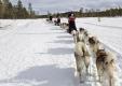 schlittenhunde-huskytrail-huskies-winterlandschaft-schweden-jaemtland-haerjedalen-1-sony_dsc1680