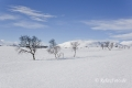 schweden-fjell-fjaell-winterlandschaft-jaemtland-haerjedalen-1-sony_dsc1593