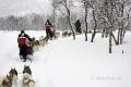 schlittenhunde-huskytrail-huskies-winterlandschaft-schweden-jaemtland-haerjedalen-1-sony_dsc1498