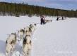 schlittenhunde-huskytrail-huskies-winterlandschaft-schweden-jaemtland-haerjedalen-1-sony_dsc1672