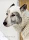 schlittenhunde-siberian-sibirischer-husky-1-sony_dsc1451