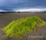 Landschaften-Wild-Atlantic-Way-Algen-gruene-Meereskueste-Kueste-Strand-Nordkueste-Irland-Nordirland-irische-nordirische-A-Sony_DSC2456