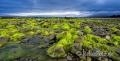 Landschaften-Wild-Atlantic-Way-Algen-gruene-Meereskueste-Kueste-Strand-Nordkueste-Irland-Nordirland-irische-nordirische-A-Sony_DSC2481