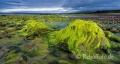 Landschaften-Wild-Atlantic-Way-Algen-gruene-Meereskueste-Kueste-Strand-Nordkueste-Irland-Nordirland-irische-nordirische-A-Sony_DSC2482