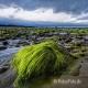 Landschaften-Wild-Atlantic-Way-Algen-gruene-Meereskueste-Kueste-Strand-Nordkueste-Irland-Nordirland-irische-nordirische-A-Sony_DSC2501