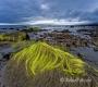 Landschaften-Wild-Atlantic-Way-Algen-gruene-Meereskueste-Kueste-Strand-Nordkueste-Irland-Nordirland-irische-nordirische-A-Sony_DSC2514