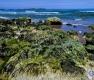 Landschaften-Wild-Atlantic-Way-Algen-gruene-Meereskueste-Kueste-Strand-Nordkueste-Irland-Nordirland-irische-nordirische-A_SAM4458