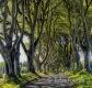 Landschaften-Wild-Atlantic-Way-Dark-Hedges-Alleen-Baumriesen-Baeume-Irland-Nordirland-irische-nordirische-A_SAM4299