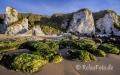 Landschaften-Wild-Atlantic-Way-White-Rocks-Kalkfelsen-Felsen-Algen-gruene-Meereskueste-Kueste-Strand-Nordkueste-Irland-Nordirland-irische-nordirische-A-Sony_DSC2167