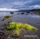 Landschaften-Wild-Atlantic-Way-Algen-gruene-Meereskueste-Kueste-Strand-Nordkueste-Irland-Nordirland-irische-nordirische-A-Sony_DSC2503