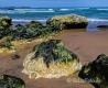 Landschaften-Wild-Atlantic-Way-Algen-gruene-Meereskueste-Kueste-Strand-Nordkueste-Irland-Nordirland-irische-nordirische-A_SAM4464