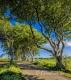Landschaften-Wild-Atlantic-Way-Dark-Hedges-Alleen-Baumriesen-Baeume-Irland-Nordirland-irische-nordirische-A_NIK4560