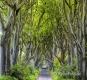 Landschaften-Wild-Atlantic-Way-Dark-Hedges-Alleen-Baumriesen-Baeume-Irland-Nordirland-irische-nordirische-A_NIK4628