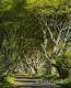 Landschaften-Wild-Atlantic-Way-Dark-Hedges-Alleen-Baumriesen-Baeume-Irland-Nordirland-irische-nordirische-A_SAM4306