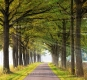 Gelderland-Sonnenstrahlen-Allee-Baum-Baeume-Herbst-Niederlande-C_NIK_1124c Kopie