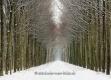 Gelderland-Winter-Alleen-Baum-Baeume-Schnee-Niederlande-C_NIK_7736a Kopie