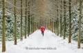 Gelderland-Winter-Alleen-Jogging-Jogger-Fitness-laufen-Laeufer-Baum-Baeume-Schnee-Niederlande-C_NIK_7918a Kopie