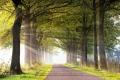 Herbst-Faerbung-Farben- Alleen-Gelderland-C_NIK_1117b Kopie