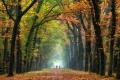 Herbst-Faerbung-Farben- Alleen-Gelderland-C_NIK_1265a Kopie