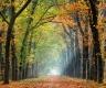 Herbst-Faerbung-Farben- Alleen-Gelderland-C_NIK_1265e Kopie