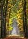 Herbst-Faerbung-Farben- Alleen-Gelderland-C_NIK_1304a Kopie