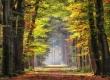 Herbst-Faerbung-Farben- Alleen-Gelderland-C_NIK_1304b