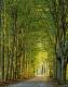 Herbst-Faerbung-Farben- Alleen-Gelderland-C_NIK_1369 Kopie