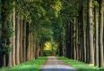 Herbst-Faerbung-Farben- Alleen-Gelderland-C_NIK_1578a Kopie