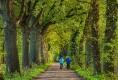 Herbst-Faerbung-Farben- Alleen-Gelderland-C_NIK_1643 Kopie