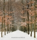 Winter-Schnee- Alleen-Gelderland-C_NIK_7759 Kopie