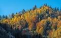 Herbst-Wald-Rumaenien-Siebenbuergen-Transylvanien-A_NIK500_6968 Kopie