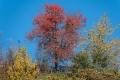 Herbst-Wald-Rumaenien-Siebenbuergen-Transylvanien-A_NIK500_6974 Kopie