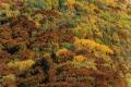 Herbst-Wald-Rumaenien-Siebenbuergen-Transylvanien-A_NIK500_6860 Kopie