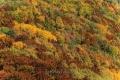 Herbst-Wald-Rumaenien-Siebenbuergen-Transylvanien-A_NIK500_6861 Kopie