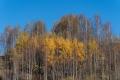 Herbst-Wald-Rumaenien-Siebenbuergen-Transylvanien-A_NIK500_6864 Kopie