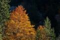 Herbst-Wald-Rumaenien-Siebenbuergen-Transylvanien-A_NIK500_6935 Kopie
