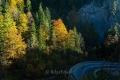 Herbst-Wald-Rumaenien-Siebenbuergen-Transylvanien-RX_02829 Kopie