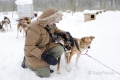 Husky-Huskies-schlitten-hunde-Finnland-Norwegen-Schweden-IMG-487A3760