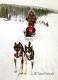 Husky-Huskies-schlitten-hunde-Finnland-Norwegen-Schweden-IMG_20190218_134829_4