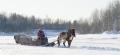 schlitten-pferde-winter-schnee-panorama-finnland-C_NIK_8302 Kopie