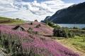 norwegen-sognefjord-e_o1i2858