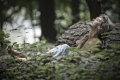 frau-natur-relaxen-entspannung-wald-a_dsc6831b